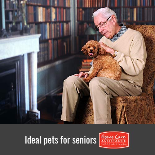 4 Pet Ideas for Your Senior Loved One in Tampa, FL