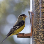 5 DIY Bird Feeders Older Adults Can Create