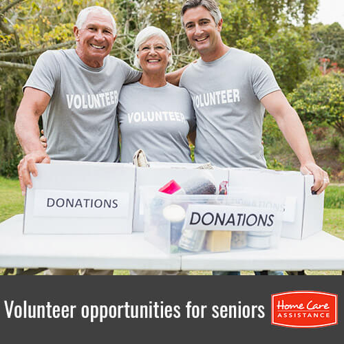 Five Opportunities Where Seniors Can Volunteer in Tampa Bay, FL
