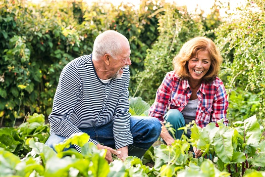 What Are the Best Spring Activities for Seniors in Tampa Bay, FL
