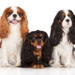 7 Ideal Dog Breeds for Aging Adults